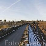 Viñedos junto a la Quinta Avessada cerca de la población de FAVAIOS. Valle del Duero. Portugal