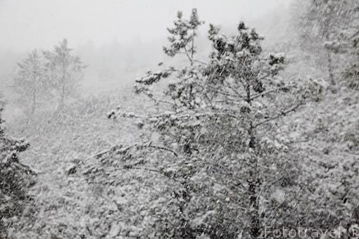 Paisaje de pinares nevados en la montaña de MARAO. Cerca de VILA REAL. Portugal