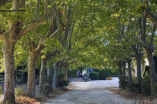 Entrada con paseo arbolado a la Quinta La Pacheca. Cerca de la población de REGUA. Valle del Duero. Portugal
