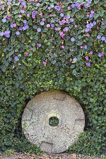Antigua piedra de molino. Quinta de la Pacheca. Cerca de la poblacion de REGUA. Valle del Duero. Portugal