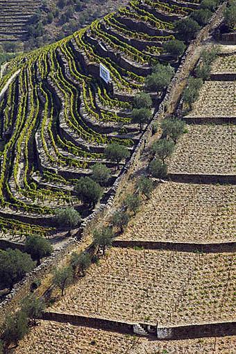 """Viñedos dispuestos en fila doble para mayor exposicion al sol llamados """"Patamares"""" y la derecha en terrazas tradicionales. Quinta do Seixo. Cerca de REGUA. Valle del Duero. Portugal"""