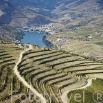 """Viñedos dispuestos en fila doble para mayor exposicion al sol llamados """"Patamares"""". Quinta do Seixo. Cerca de REGUA. Valle del Duero. Portugal"""