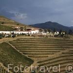 Quinta Nova y viñedos. En COVAS DO DOURO. Valle del Duero. Portugal