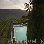 Piscina. Quinta Nova y viñedos. En COVAS DO DOURO. Valle del Duero. Portugal