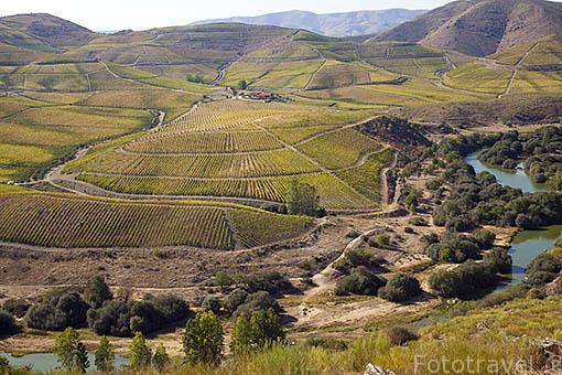 Viñedos y el rio Coa, afluente del rio Duero. Cerca de CASTELO MELHOR. Valle del Duero. Portugal