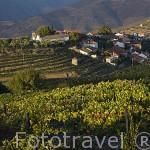 Población de VILAROUCO entre viñedos. Valle del Duero. Portugal
