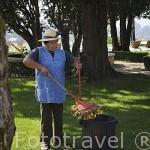 Limpiando el jardin exterior. Hotel Casa da Calzada. Población de AMARANTE. Portugal