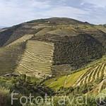 Viñedos. Valle del Duero. Portugal