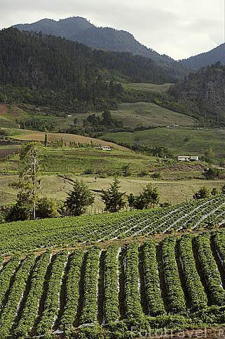 Resultado de imagen para fotos de cultivos en valle nuevo