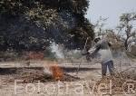 Agricultor limpiando su tierra y quemando los rastrojos. Cerca de Palmarins Ngethie. Delta de Saloum. Senegal. Africa