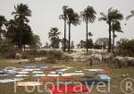 Ropa y mantas puestos a secar al sol por una chica Serere. Cerca de Palmarins Ngethie. Delta de Saloum. Senegal. Africa