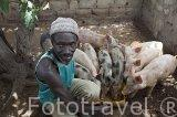 El Sr. Ernest Sarr encargado de la cria de cerdos en la aldea de Ndiol Ngankhen. Delta del Saloum. Senegal. Africa