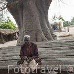 Un anciano descansando bajo la sombra de un árbol en la aldea de Yayeme. Delta del Saloum. Senegal. Africa