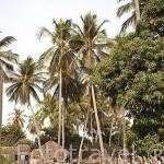 Aldea de Yayeme, cerca del palmeral de la biosfera de Samba Dia. Delta del Saloum. Senegal. Africa