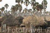 """Chozas cerca de la aldea de Yayeme rodeados por el palmeral de la especie """"Borassus aethiopum"""". Reserva de la biosfera de Samba Dia. Delta del Saloum. Senegal. Africa"""