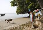 Campamento Simal. En Simal. Delta del Saloum. Senegal. Africa