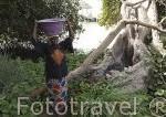 Una señora junto a un pozo de agua dulce en las raices de una ceiba. En Simal. Delta del Saloum. Senegal. Africa