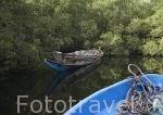 Piragua cargada de ramas de manglar aunque prohibido por ley se sigue cortando. Cerca de Toubacouta. Delta del Saloum. Senegal. Africa