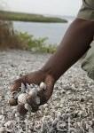Isla natural formada completamente por conchas. Area marina protegida Bamboung.Cerca de Toubacouta. Delta del Saloum. Senegal. Africa