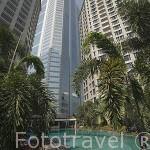 Piscina rodeada de palmeras. Hotel Conrad Bangkok. Ciudad de BANGKOK. Tailandia