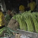 Un puesto de verduras. Mercado Pak Kkhlong Talad. Ciudad de BANGKOK. Tailandia
