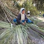Jovenes birmanos cortando bambu junto a la carretera para vender luego como escobas. CHIANG RAI. Tailandia