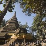 Antiguo templo 1291 Wat Chedi Luang entre arboles de teca. CHIANG RAI. Tailandia