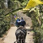 Paseando en elefante en el poblado de la tribu de montaña Karen en RUOM MIT. Chiang Rai. Tailandia