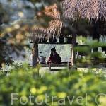Vivienda de la tribu de los Karen Pakayaw. Poblado de KEAW VUA DAM, junto al rio Kok. Chiang Rai. CHIANG RAI. Tailandia