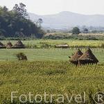 Campos de cultivo de fresa y cacahuetes. Cerca de THATON. Chiang Rai. Tailandia