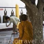 Monje budista y señora tocando las campanas en el templo Wat Phrathat Doi Suthep Rajvoravihara, en la montaña Suthep. CHIANG MAI. Tailandia