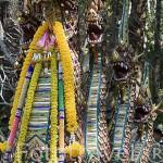 Dragones (Naga) y 306 peldaños en la entrada al templo Wat Phrathat Doi Suthep Rajvoravihara, en la montaña Suthep. CHIANG MAI. Tailandia