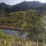 Vista del rio Nam Soi y campos de ajo. Provincia de Mae Hong Son. Tailandia
