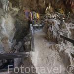 """La cueva de los peces """"Fish Cave"""" en un entorno natural donde los carpas Soro nadan libremente. MAE HONG SON. Tailandia"""