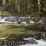 Rios y aguas termales en el area de Emerald Pool. Cerca de Krabi. Tailandia