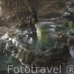 Bañistas en el area de la piscina natural Esmeralda. (Emerald Pool). Cerca de KRABI. Tailandia