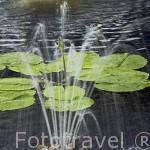 Nenufares y fuente. Hotel - Spa Pimalai. Sur de la isla de KO LANTA YAI. Tailandia