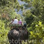 Elefantes asiaticos haciendo un recorrido turistico en la isla de KO LANTA. Tailandia