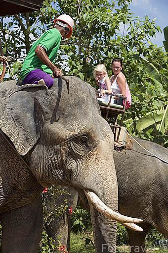 Elefante asiatico y turistas iniciando un recorrido turistico en la isla de KO LANTA. Tailandia