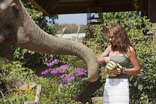 Chica dando de comer platanos a un elefante asiatico despues de terminar recorrido turistico. Isla de KO LANTA. Tailandia