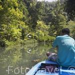 Visita guiada por un canal que conduce a las cuevas de Khao Kob. Entre KO LANTA y TRANG. Tailandia