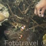 Peces coloridos en las islas de TRANG. Mar de Andaman. Tailandia