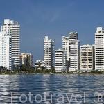 Altos edificios de viviendas en Bocagrande. CARTAGENA DE INDIAS. Colombia