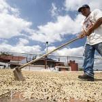Secadero de granos de cafe. Fabrica agricola San Agustin. Concepción de ATACO. Ruta de las Flores. El Salvador. Centro américa.
