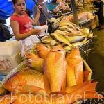 Venta de pescados en el muelle del puerto de La Libertad. Departamento de la Libertad. El Salvador. Centro américa.