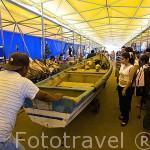 Pescadores atravesando con su barca el mercado del muelle del puerto de La Libertad. Departamento de la Libertad. El Salvador. Centro américa.