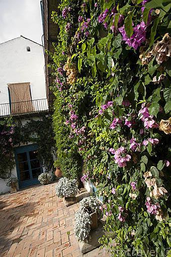 Pared forrada con flores. Patio de la Madama. Palacio de Viana. Ciudad de CORDOBA. Patrimonio de la Humanidad. Andalucia. España