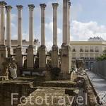 Columnas romanas junto al edificio del Ayuntamiento. Ciudad de CORDOBA. Patrimonio de la Humanidad. Andalucia. España
