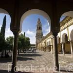 El patio de los Naranjos y el claustro. Mezquita Catedral. Ciudad de CORDOBA. Patrimonio de la Humanidad. Andalucia. España