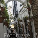 Calle de las Flores. Ciudad de CORDOBA. Patrimonio de la Humanidad. Andalucia. España